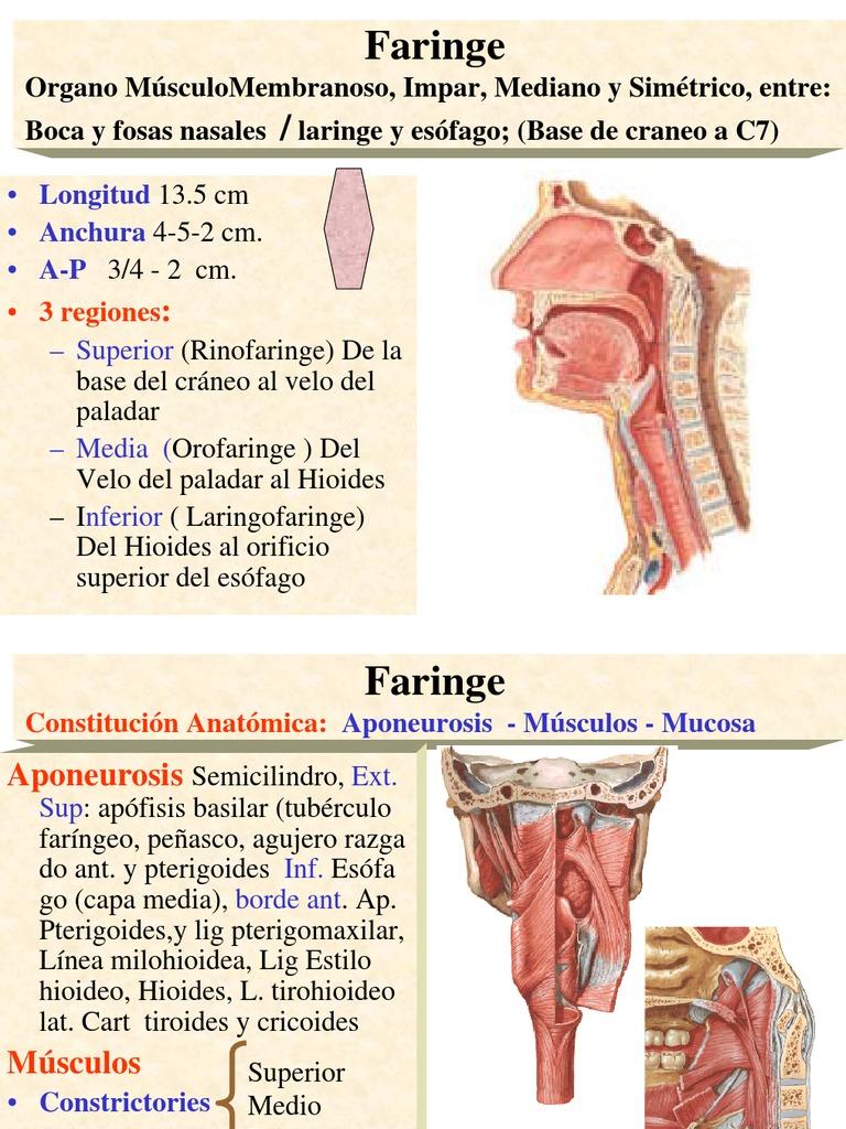 FARINGE Y ESOFAGO.pdf