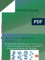 Respiracion- Celular.pptx