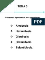 Tema 3 Protozoosisdigestivas de aves y mamíferos
