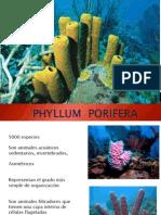 Clase 1 Porifera