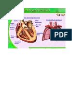 Gambar sistem darah.doc