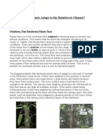 Plant Adaptations to the Rainforest