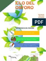 Ciclo Del Fosforo (1)