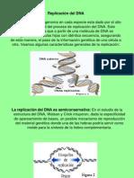 replicacion genteica
