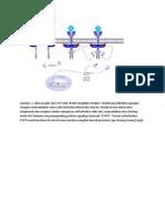aktivasi sitokin