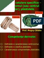 Centrozomul, Plastidele