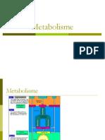 1.Glikolisis Dan Katabolisme Heksosa