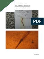 Practical Parasitology 7