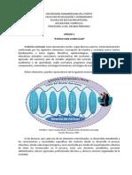 Unidad 2 - Estructura Curricular