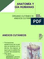 3. ANEXOS CUTANEOS