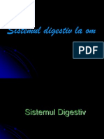 Sistemul Digestiv La Om