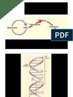 genética molecular.pdf
