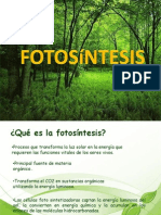 Fotosintesis Original