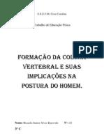 Formação da coluna vertebral e suas implicações na postura do homem.