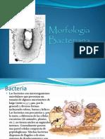 Morfolofia Bacteriana Mandar