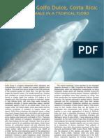 Oviedo L. (2007). Dolphins in Golfo Dulce, Costa Rica