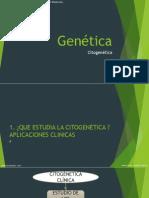 Genética _g4_citogenética