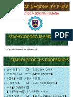 Staphylococcus Epidermidis
