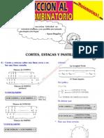 29 Cortes , Estacas y Pastillas