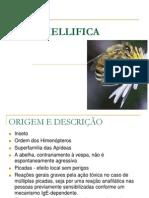 Apis Mellifica (Ceh) - Prof. Francisco