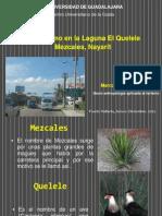 QUELELE-MEZCALES.pptx