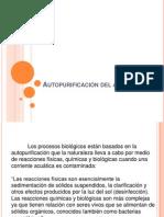 Autopurificación del agua.pptx
