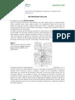 Introducción al metabolismo (Por qué Biotecnología) para fotocopiar