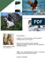Conceitos_de_especies_2011.ppt