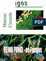 fungosealgas