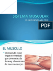 Sistema Muscular Clase