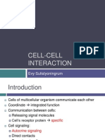 Cell Cell Interaction