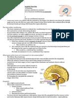 Amygdala Function