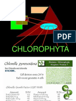 5.clorofitas