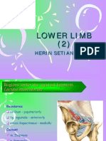 Lower Limb (2)