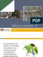 Powerpoint nr. 3 - Pirâmides Ecológicas