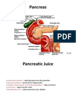 HPA Digestive System Pancreas Liver Small Intestine Part II Koopstyle