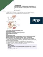 Info de Expo de Sistema Nervioso