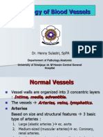 Pathology of Blood Vessels