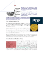 Citomegalovirus.doc