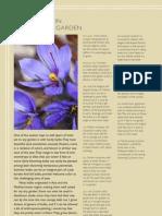 Bulbs and irises