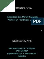 Presentacion de Diapositivas Paul Burgos