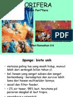 2. Filum Porifera