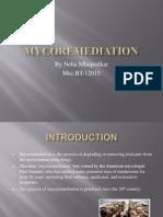 mycoremediation.ppt