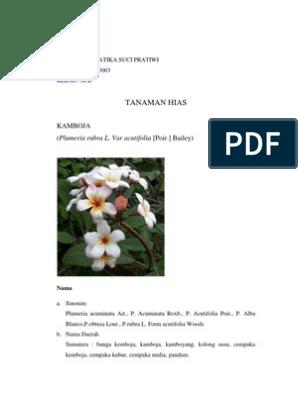 Unduh 93 Gambar Dan Struktur Bunga Kamboja Paling Keren