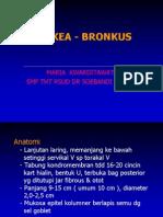Trakea - bronkus