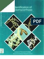 Ectomycorrhiza.pdf