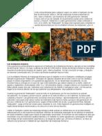 43 Las Mariposas Monarca