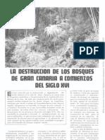 Destrucción de los bosques de Gran Canaria en el siglo XVI