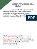 AULA_2_OS CROMOSSOMOS METAFÁSICOS E O CICLO CELULAR