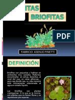 PLANTAS BRIOFITAS